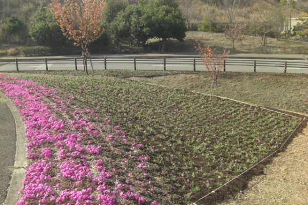 徳島市 植栽