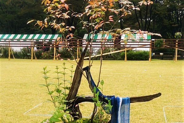 日比谷公園ガーデンコンテスト